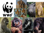 WWF Collage